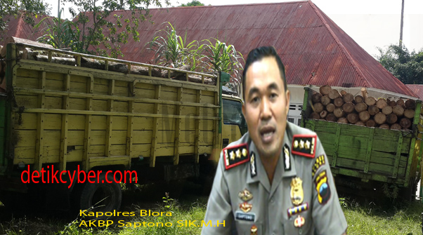 Illegal Logging : Oknum Polisi Diduga Terlibat Mengawal Kayu Jati Curian