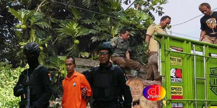 Curi 91 Pohon Nekat Tabrak Polisi Saat Ditangkap