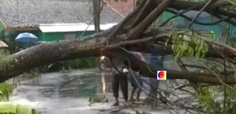 Hujan Deras dan Angin Kencang Akibatkan Pohon Besar Tumbang dan Genangan Air di Rumah Warga