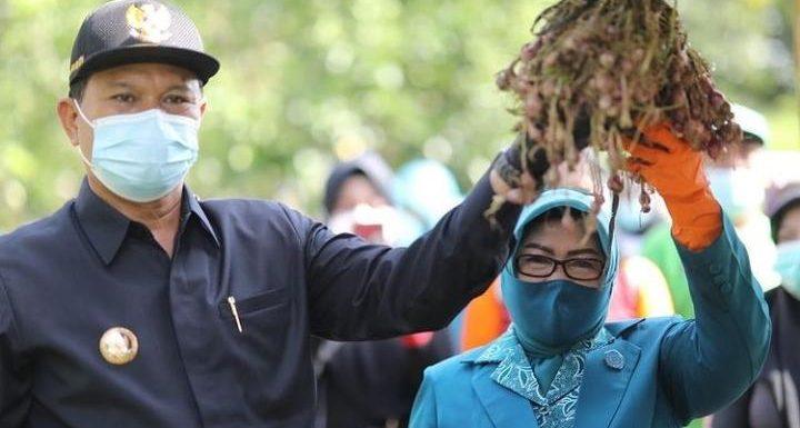 Walikota Madiun Panen Hasil Budidaya Tanaman Di Agrowisata Ngrowo Bening, Tidak Perlu Ketergantungan dari Daerah Lain