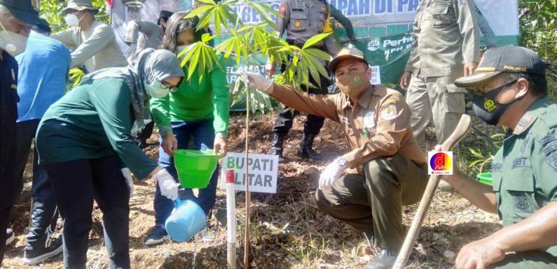 Dalam Rangka HUT Perhutani Administratur Perhutani Blitar melaksanakan Penanaman Serentak di Wilayah Kerjanya